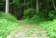 Travel Blogs - Japan