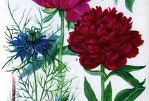 FlowerBrew Identitet Inspo / Moodboard