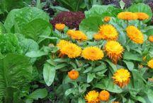 Gardening Hints