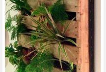 Placid Plants