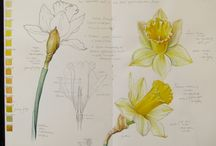 Botanical sketches / Botanical sketches, watercolor and other