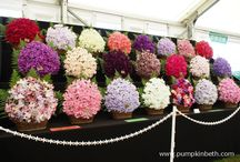 Scented flowers / Fragrant and beautifully scented flowers.