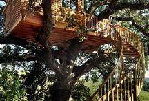 case albero