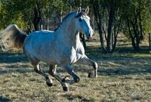 Equine Photography.