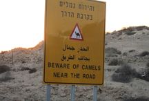 Israel: Desert and Camels / http://www.customisraeltours.com Discover the sites of the Holy Land, around the Sea of Galilee, Jerusalem, Bethlehem, Nazareth, the Dead Sea.