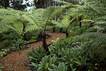 Native NZ garden