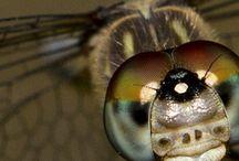 Viewbug Contests