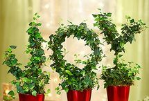 Christmas Decor & Ideas / Christmas flowers and decorations from 1800flowers are the perfect way to spruce up your season! From festive Christmas wreaths to trees, plants and flowers our selection has a little (or big) something for every style.