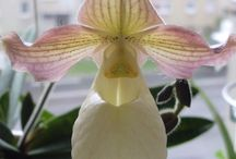 orchids / orchid plants and flowers