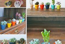 Plant Gifting 101