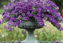 CONTAINER GARDENING / ANY TYPE OF AN OUTDOOR CONTAINER THAT YOU CAN PUT FLOWERS & PLANTS IN TO.