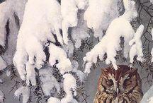 Ugle/owl