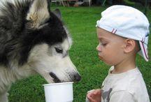 Husky / Volt nekem nagyon régen egy szibériai husky kiskutyám. Axel 16 éves koráig élt. Azóta is csak husky-t szeretnék, ha egyszer kertes házban fogok élni. Addig meg nézegetem a képeket :)