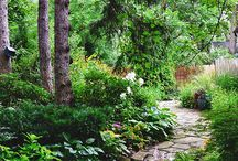 Metsä/varjo puutarha