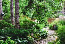little woodland garden