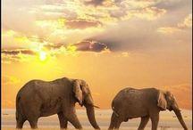 Art study: Elephants