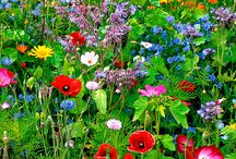 Liz's garden