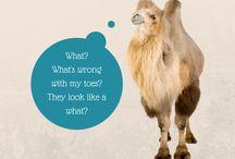 Dromedary Digit Disorder (aka Camel Toe)