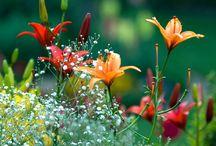 Garden & Flower Pairing / by Michelle Kinerson