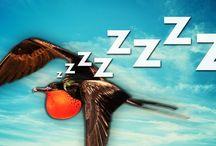 Weird Sleep Facts