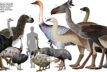 The largest Known Birds: Elephant Brids - 8 Giant