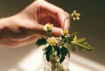 Ambientes Internos: Conheça 06 Espécies de Plantas Que Você Não Vai Matar / Separamos nessa parta ainda mais sugestões de espécies fáceis de cuidar em ambientes internos.