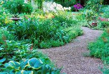 Steve and Karen / Garden ideas