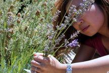 lavender press