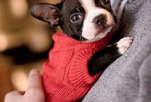 hunde babys<3