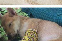 zranene zvieratka