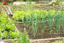 Garden / Garden life