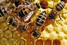 ANIMAL • Bee