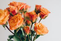 Fleurs / Telle une promenade dans les champs, retrouvez l'odeur fraîche des fleurs, associant des notes douces et poudrées.