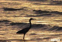 Baja California / Ogni anno, da gennaio ad aprile, nelle baie della Baja California giungono dall'Artico migliaia di balene grigie per riprodursi, creando uno degli ultimi santuari naturali della terra.