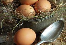 tojás-receptek/ėtel/