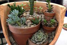 cacti flower pots
