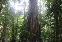 Rainforest / by Kathy Smith
