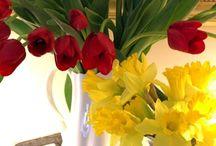 pretty flowers / pretty flowers / by Dottie Williams