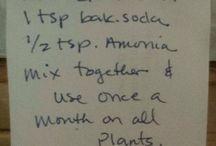 plant food