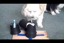 hunde Intelligents spielzeug