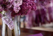 Цвет и цвета