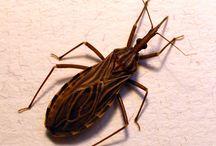 Bug ref