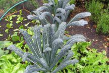 Planten voor permacultuur
