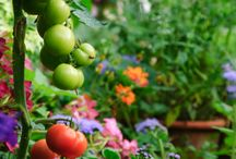 A perfect garden
