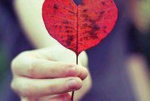 love  / hearts
