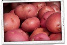 General Potato Stuff / by Black Gold Farms