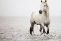 Horses  / public
