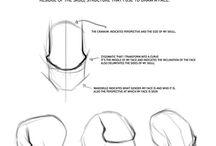 anatomia do rosto