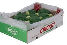 Our broccoli formats / Formats which are used in our company