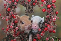 Simply ADORABLE! / The lovable cuteness of life / by Stacy Sudberry